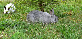 Bunny στη χλόη Στοκ εικόνα με δικαίωμα ελεύθερης χρήσης