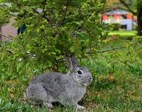 Bunny στη χλόη Στοκ Φωτογραφίες