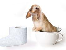 Bunny τουαλετών στοκ εικόνα με δικαίωμα ελεύθερης χρήσης