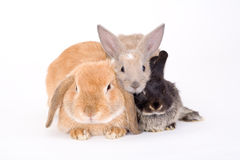 bunny τρία Στοκ εικόνα με δικαίωμα ελεύθερης χρήσης