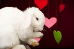 bunny χαριτωμένα πόδια που πλέν&omicr Στοκ Φωτογραφία