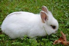 bunny χαριτωμένο λίγα Στοκ φωτογραφίες με δικαίωμα ελεύθερης χρήσης