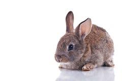 bunny χαριτωμένο Στοκ Εικόνες