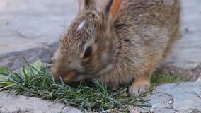 bunny χαριτωμένο φιλμ μικρού μήκους