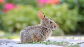 bunny χαριτωμένο απόθεμα βίντεο
