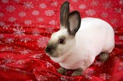bunny χειμώνας Στοκ Φωτογραφία