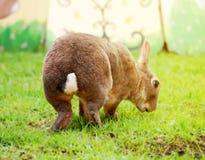 Bunny& x27; дно s Стоковая Фотография RF