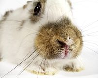 Bunny 03. Bunny Stock Photography