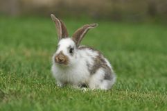 Bunny. On the grass. close up Stock Images