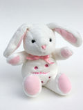 Bunny Stock Images