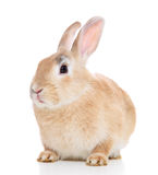 Bunny. Cute little bunny. All on white background royalty free stock photography