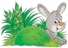 Free Bunny Stock Photography - 2029812