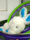 Bunny2 Fotografie Stock