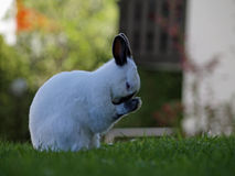 Free Bunny Royalty Free Stock Photos - 2530608