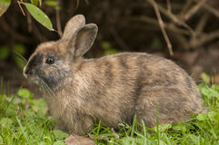 Bunny. Very lovely small bunny on green grass Royalty Free Stock Photography