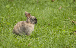 Bunny. Very lovely small bunny on green grass Stock Photography