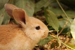 Bunny Στοκ Εικόνα