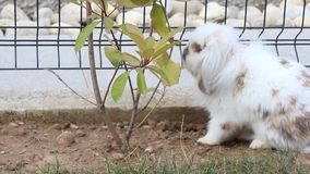 bunny απόθεμα βίντεο