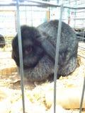 bunny Στοκ εικόνα με δικαίωμα ελεύθερης χρήσης