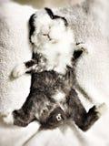bunny foto de stock