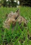 bunny Imagem de Stock