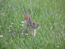 bunny Στοκ Φωτογραφία