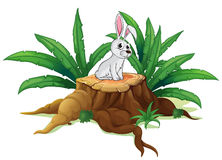 A bunny above a trunk Stock Photography