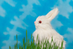 Bunny on a background of blue sky and green grass. Stock Images