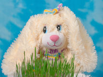 Bunny on a background of blue sky and green grass. Royalty Free Stock Images