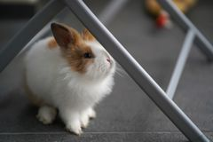 Bunny Is On The Balcony foto de stock