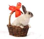 Bunny in Basket Stock Photo