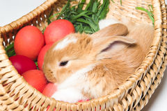 Bunny in basket royalty free stock images