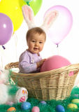 Bunny in a basket Stock Image