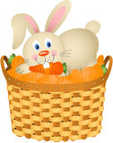 Bunny in a basket with carrots Stock Photography