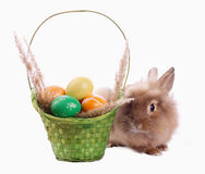 Bunny and basket with eggs. Cute bunny and green basket with Easter eggs  on white Royalty Free Stock Images