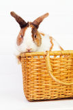 Bunny in a basket Royalty Free Stock Photo