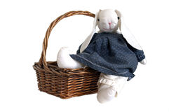 Bunny with a basket Royalty Free Stock Photography