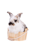 Bunny in the bathtub Royalty Free Stock Images