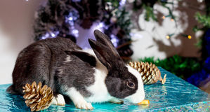 Bunny. royalty free stock image