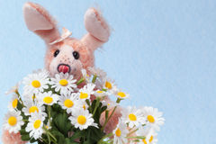 Bunny with bouquet of marguerite Royalty Free Stock Images