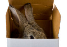 Bunny on box Stock Photography