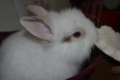 Bunny and Bun Royalty Free Stock Photo