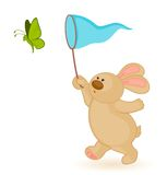 bunny with butterfly Royalty Free Stock Image