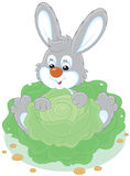 Bunny with a cabbage Stock Photo