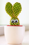 Bunny cactus. Closeup of a small cactus in shape of a bunny Royalty Free Stock Photography
