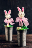 Bunny cake pops Royalty Free Stock Images