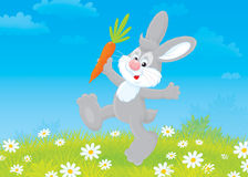 Bunny with a carrot. Grey rabbit friendly smiling and jumping with a carrot Royalty Free Stock Image