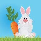 Bunny Stock Image