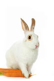 Bunny with carrots Royalty Free Stock Photo