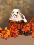 Bunny in a Cart Royalty Free Stock Photos